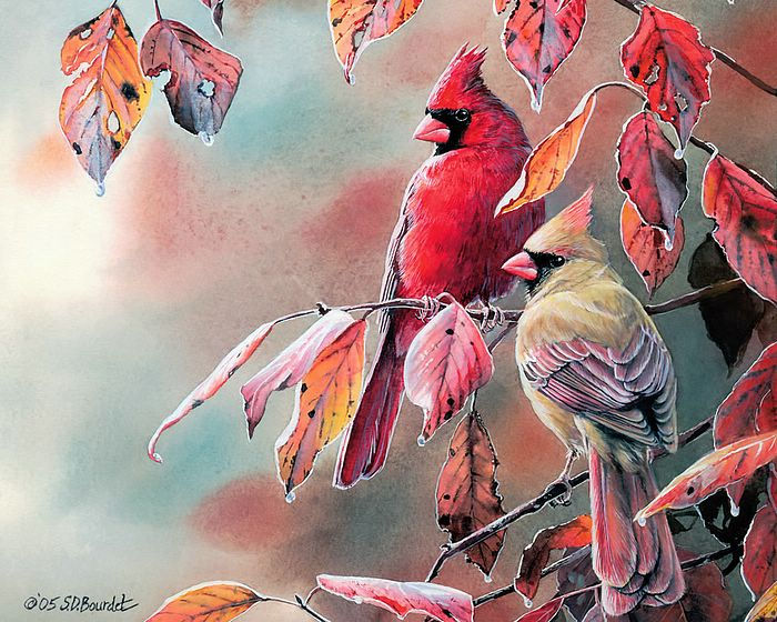 Cardinal Bird Wallpaper Desktop 700x560