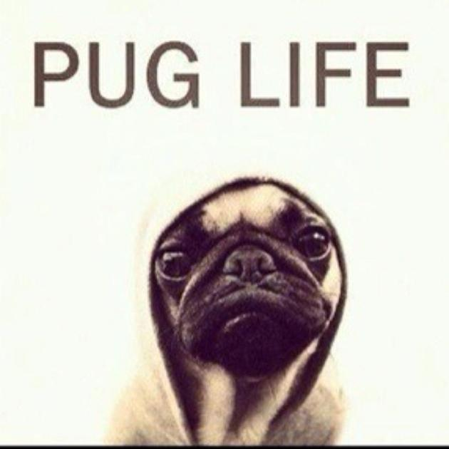 Funny Pug Pictures CrazeCentral 630x630