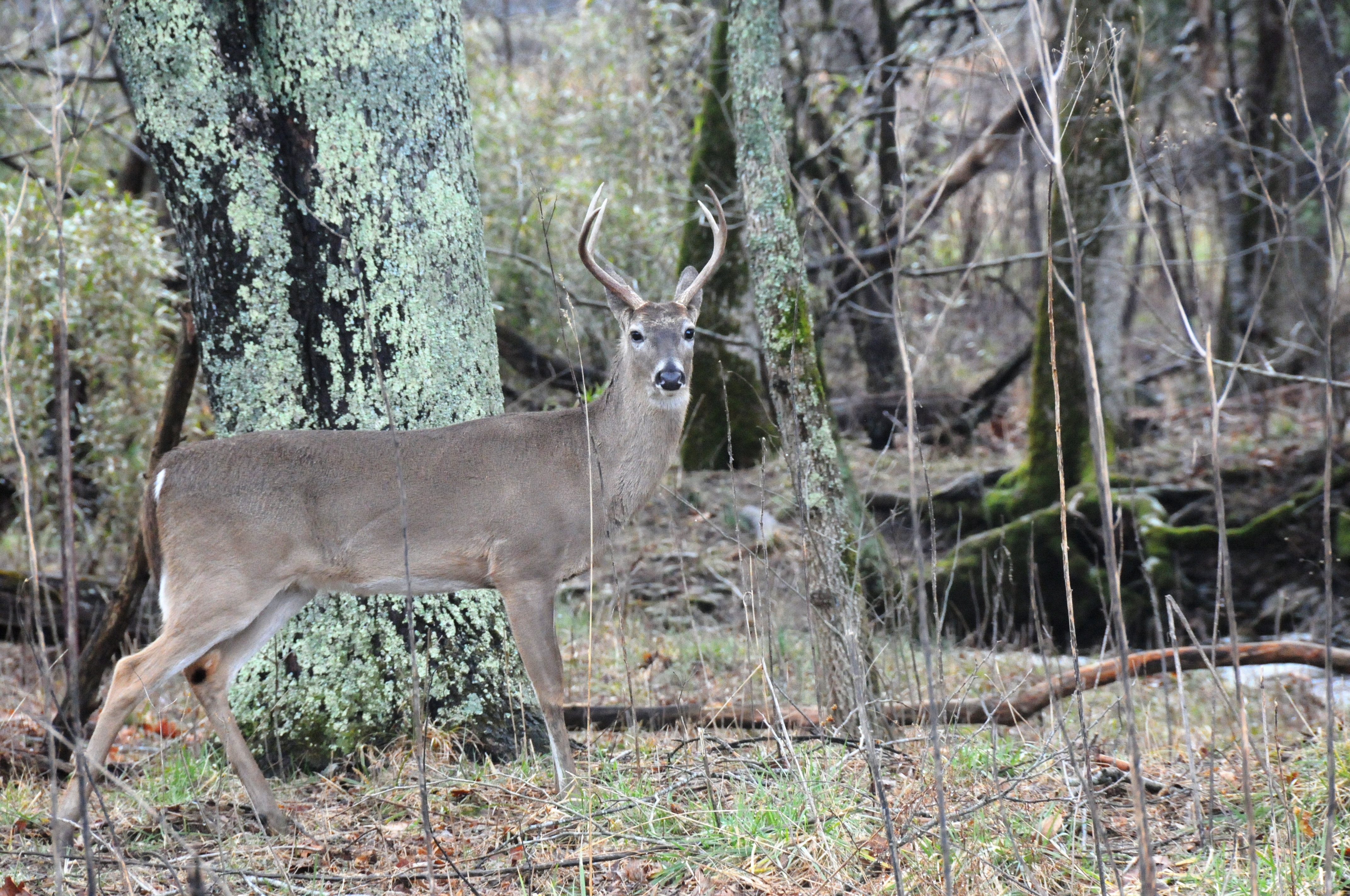 Missouri Aims to Slow Spread of CWD Realtree 4288x2848