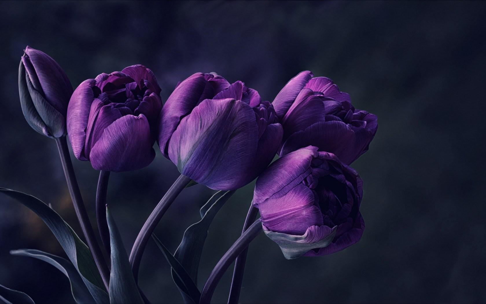 Showing Gallery For Dark Purple Flowers Wallpaper