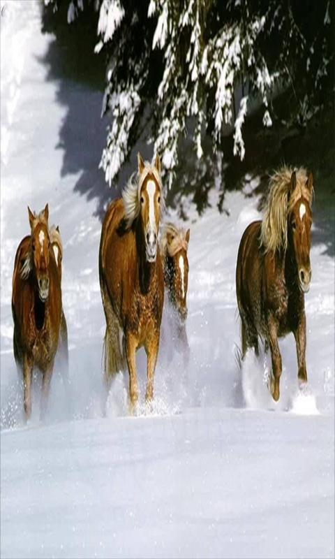 Running Horse live wallpaper   Android Apps on Google Play 480x800