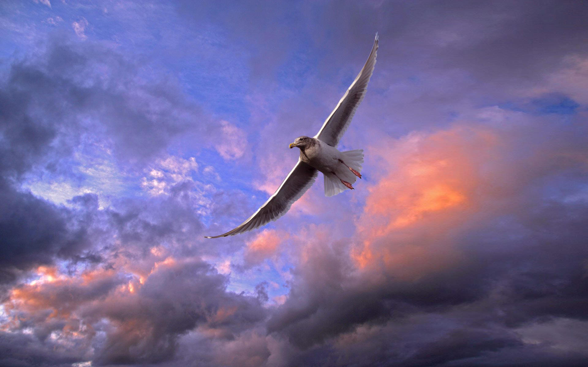 Wonderful Flying Bird Wallpaper 1920x1200 1920x1200