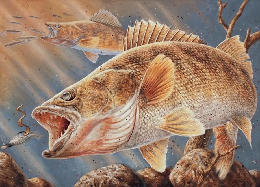 Walleye screensavers and wallpapers wallpapersafari for Walleye fishing videos
