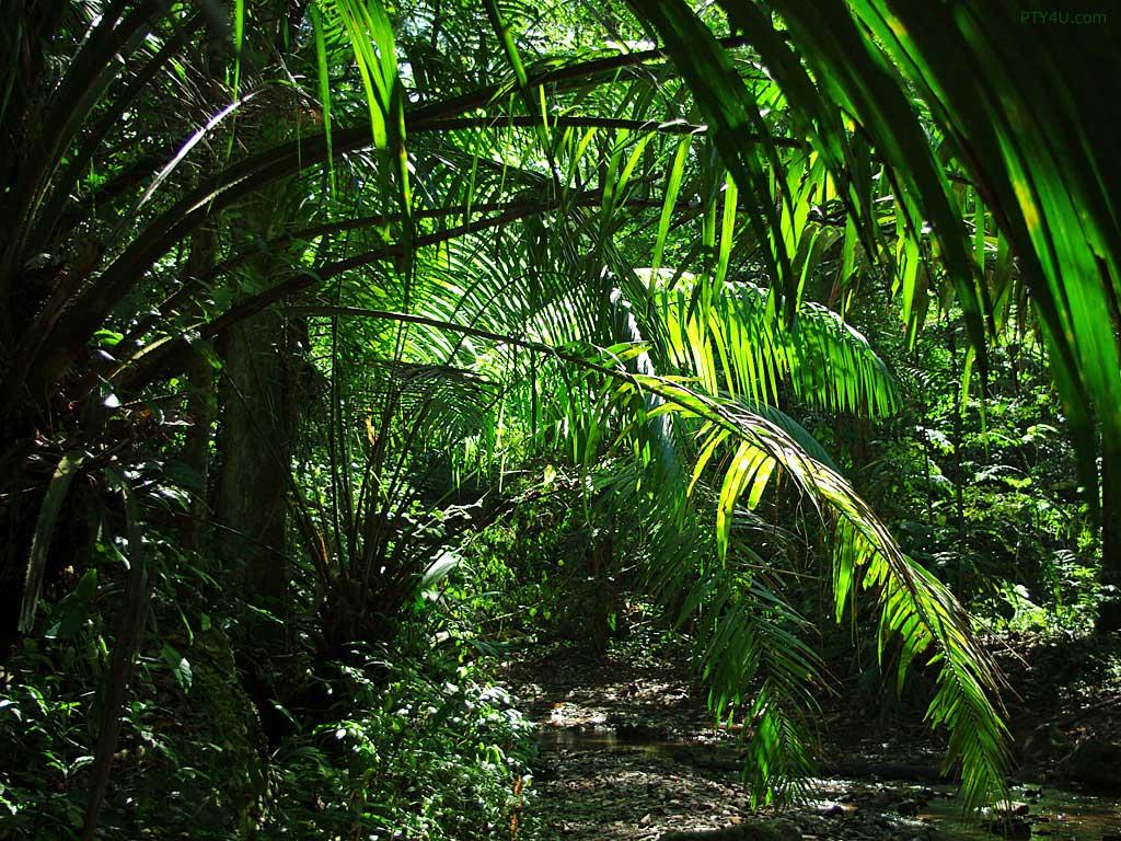 Jungle Wallpaper Desktop hd Jungle 17146 hd Wallpapers 1024x768