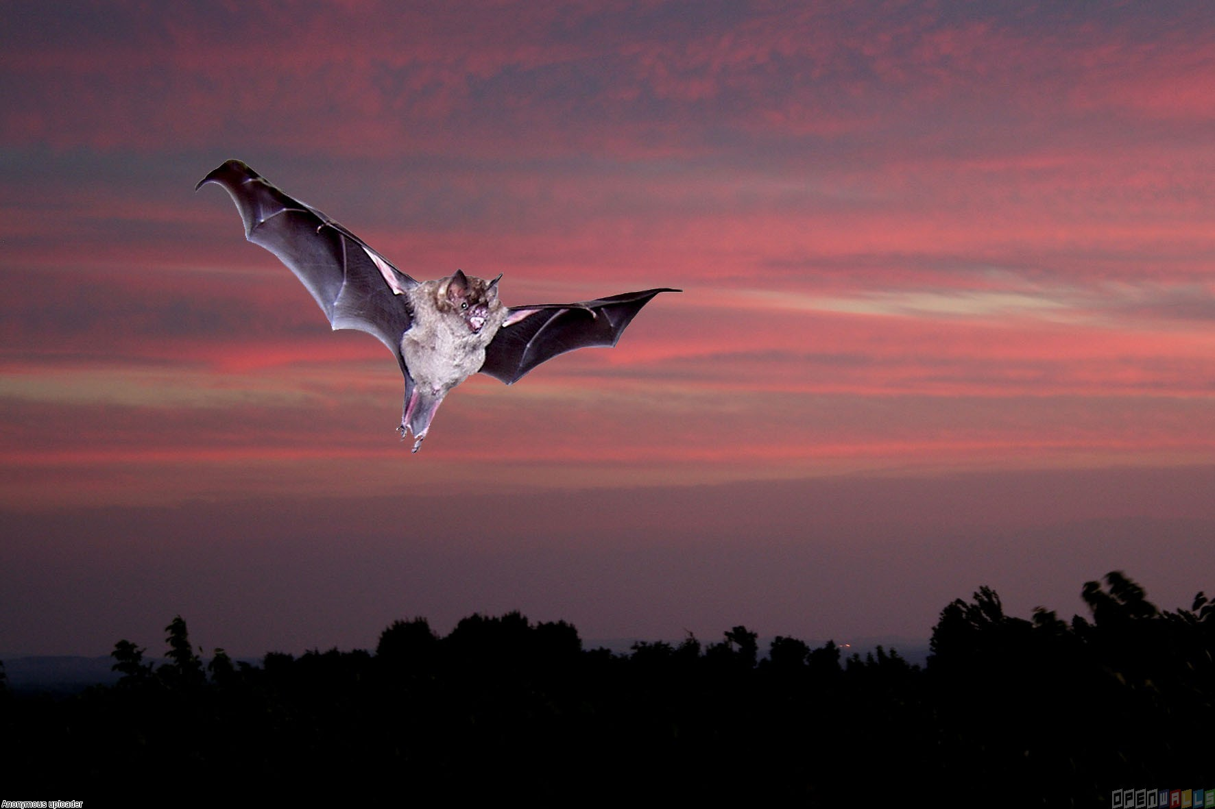 Flying bat wallpaper 20323   Open Walls 1772x1181