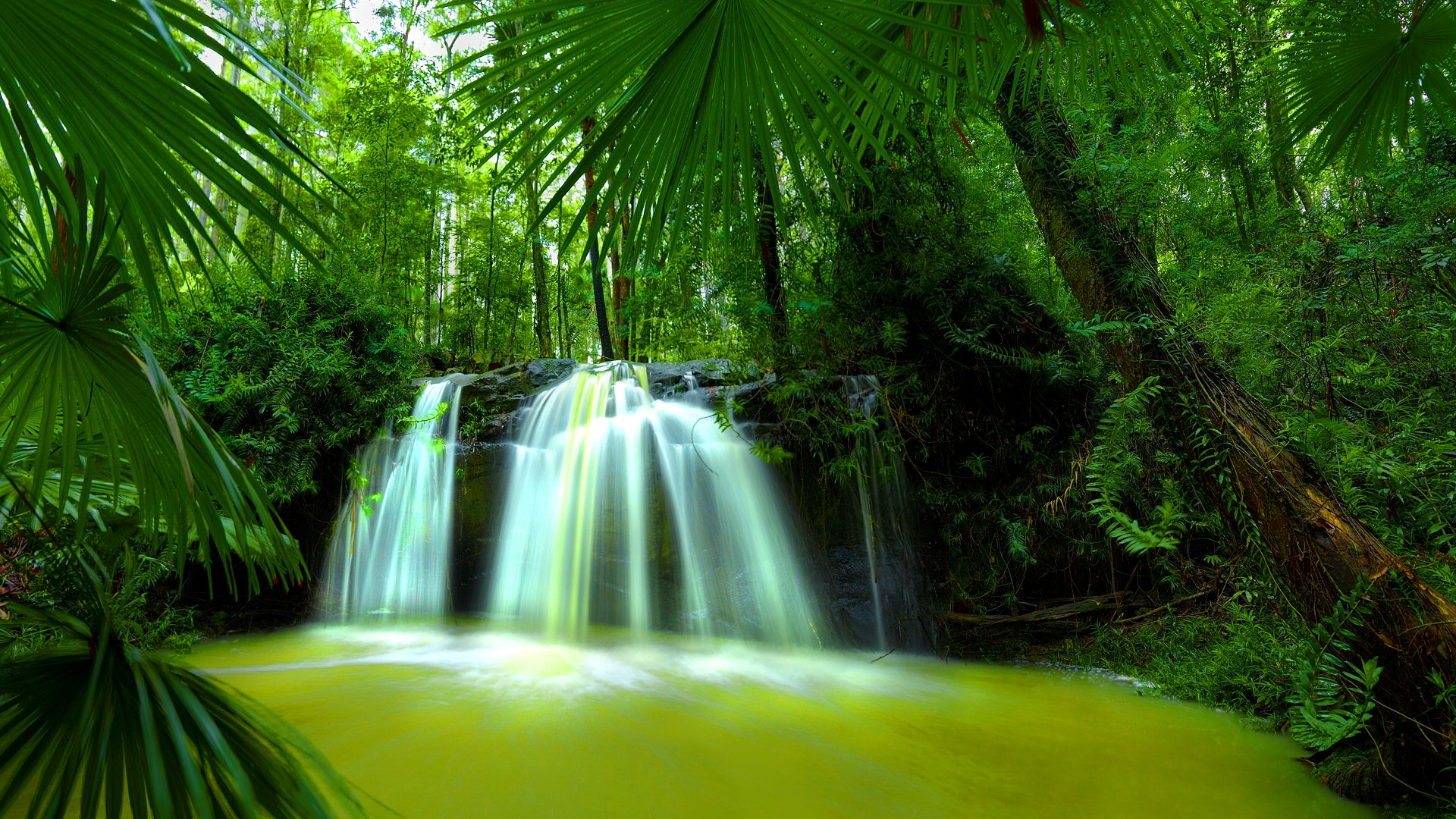 Download Beautiful Nature Waterfall Green Forest HD Wallpaper. Search ...