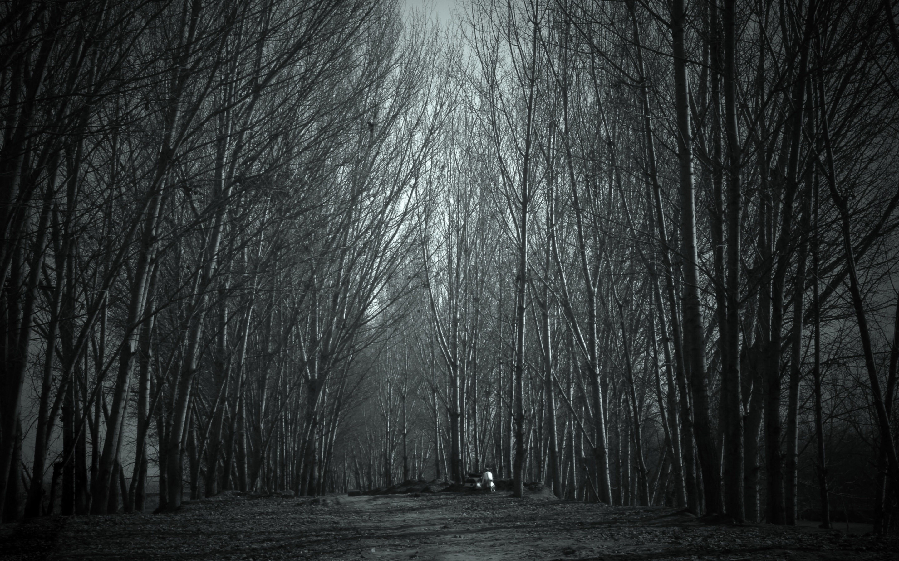 Haunted Forest Wallpaper 59 images 2880x1800