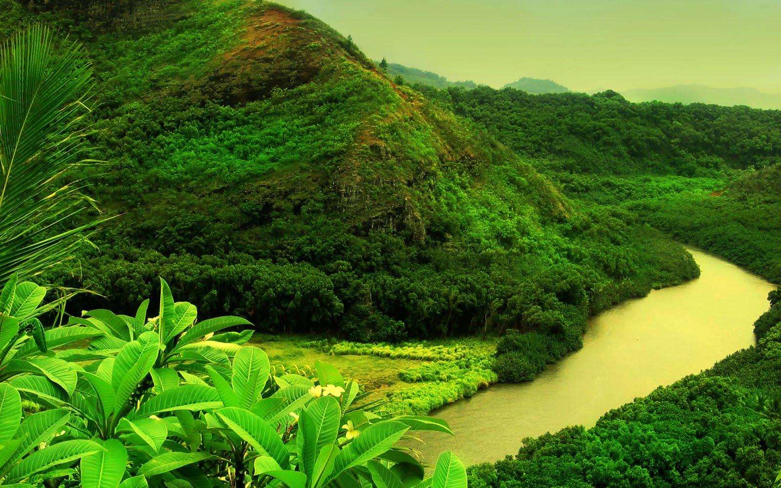Hd wallpaper jungle - Jungle Forest Hd Wallpapers Photos Desktop Wallpapers