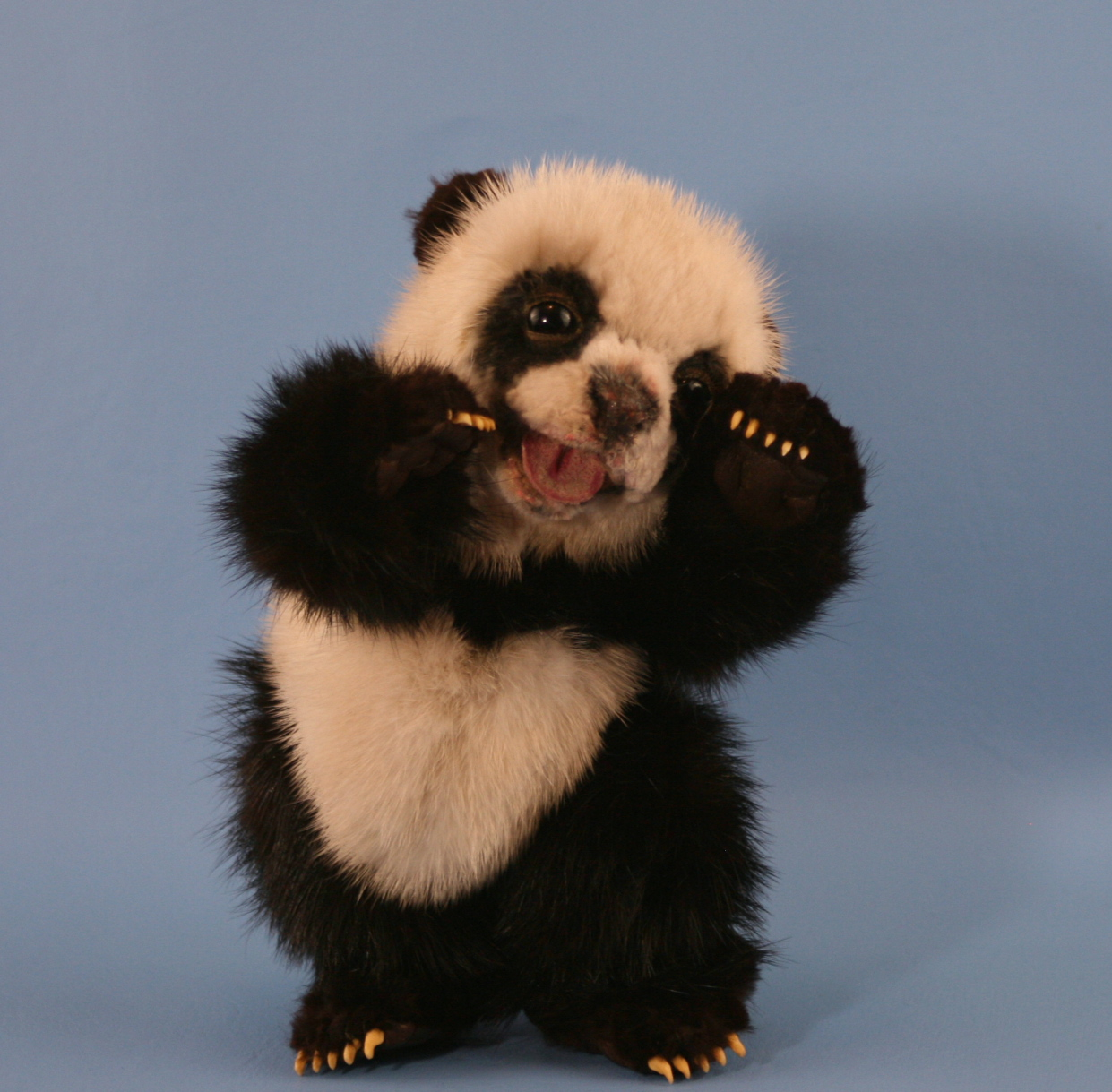 Displaying 14 Images For   Cute Baby Panda Bears 1241x1219