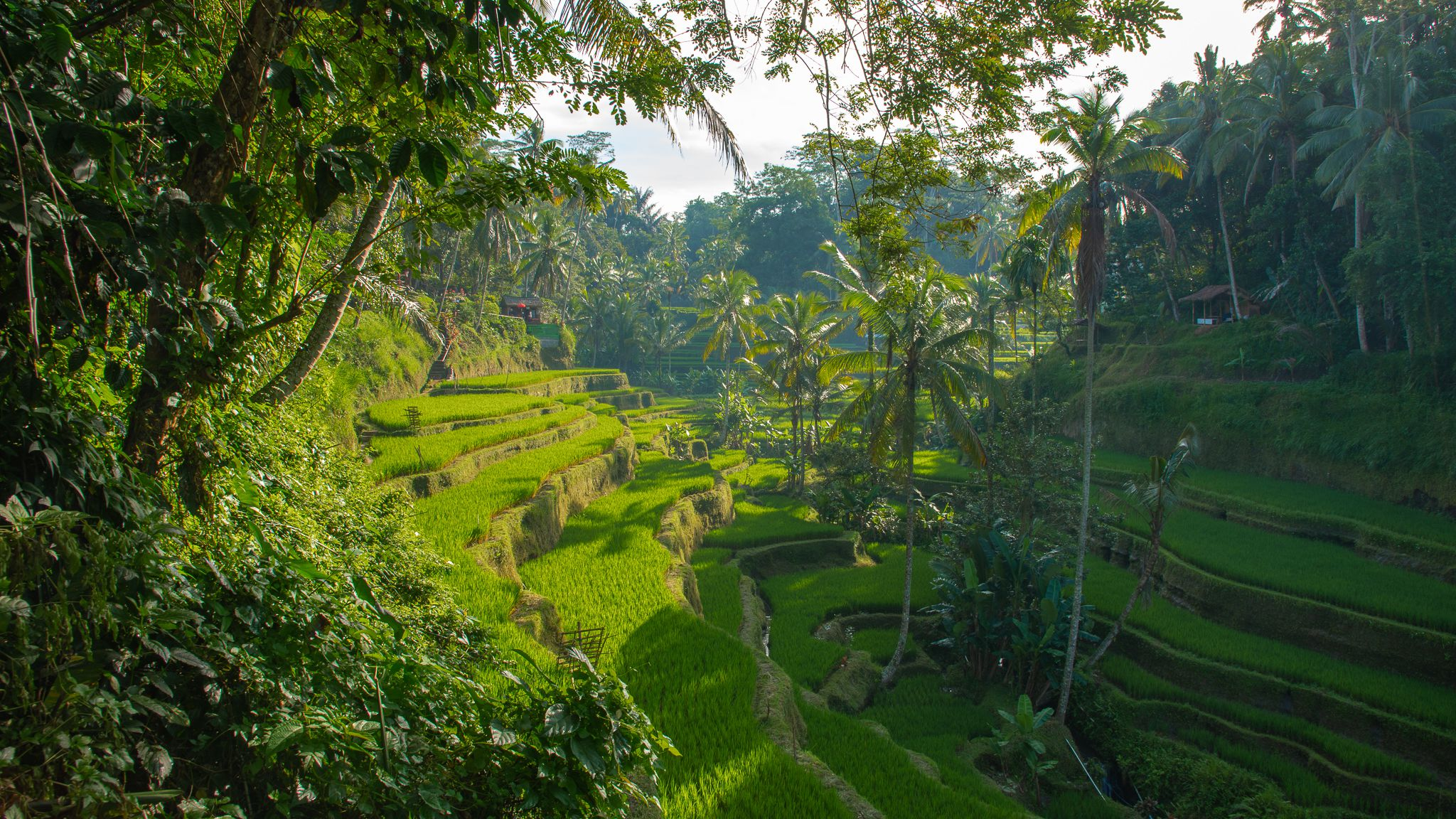 Ubud Bali Tips What to Know Before Going to Ubud 2048x1152