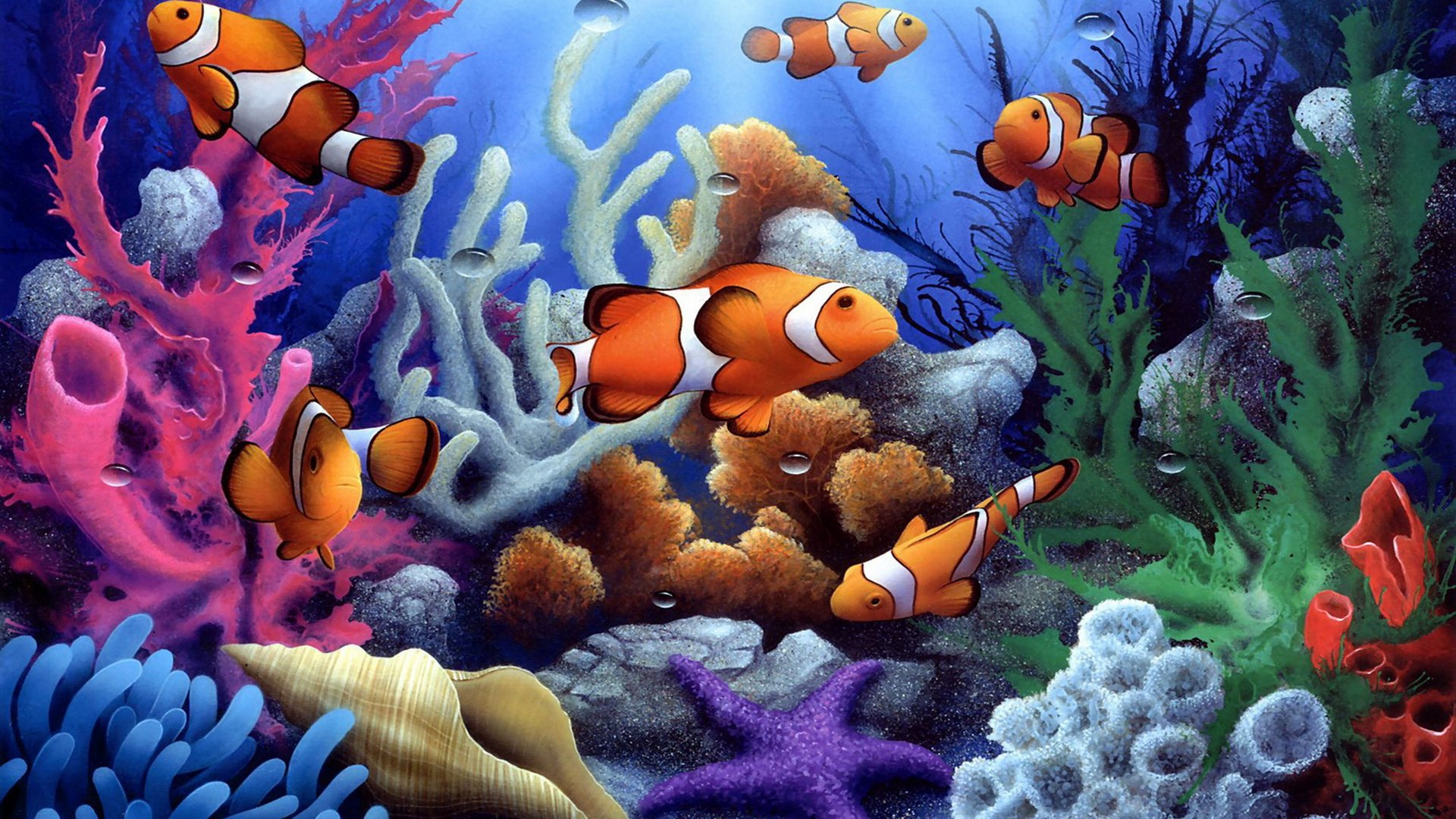 Most beautiful Fishes 1920x1080
