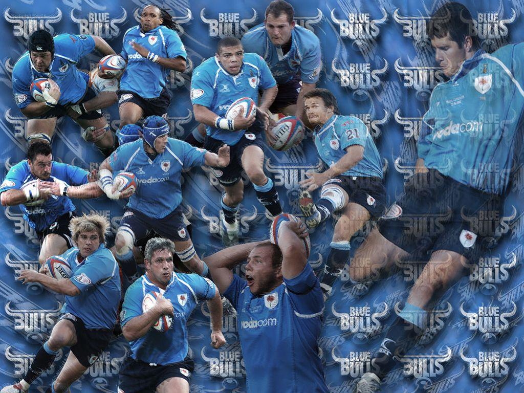 Blue Bulls Wallpaper Blue bulls 1024x768
