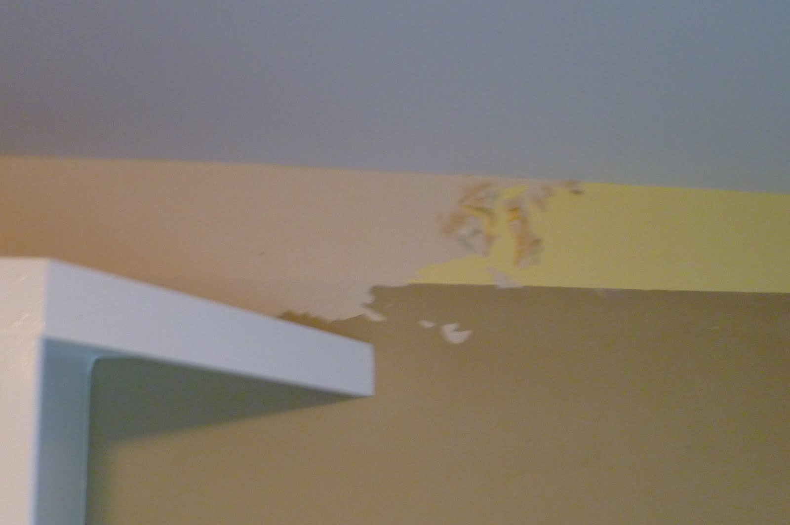 Piranha Wallpaper Remover Spray A Shaver And Special 1600x1064