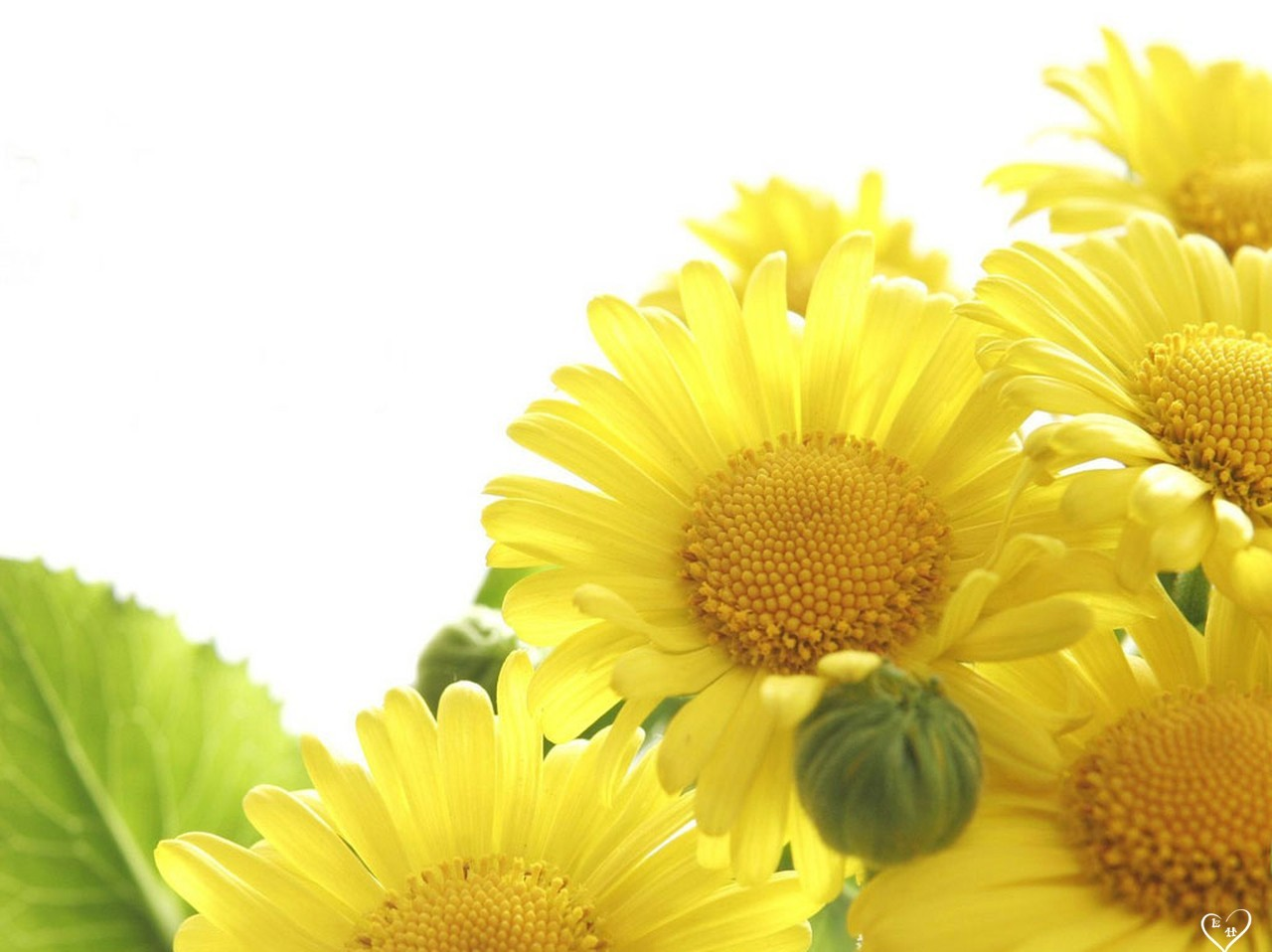 Free Download Moons Flower Yellow Flower Wallpaper 1280x958 For