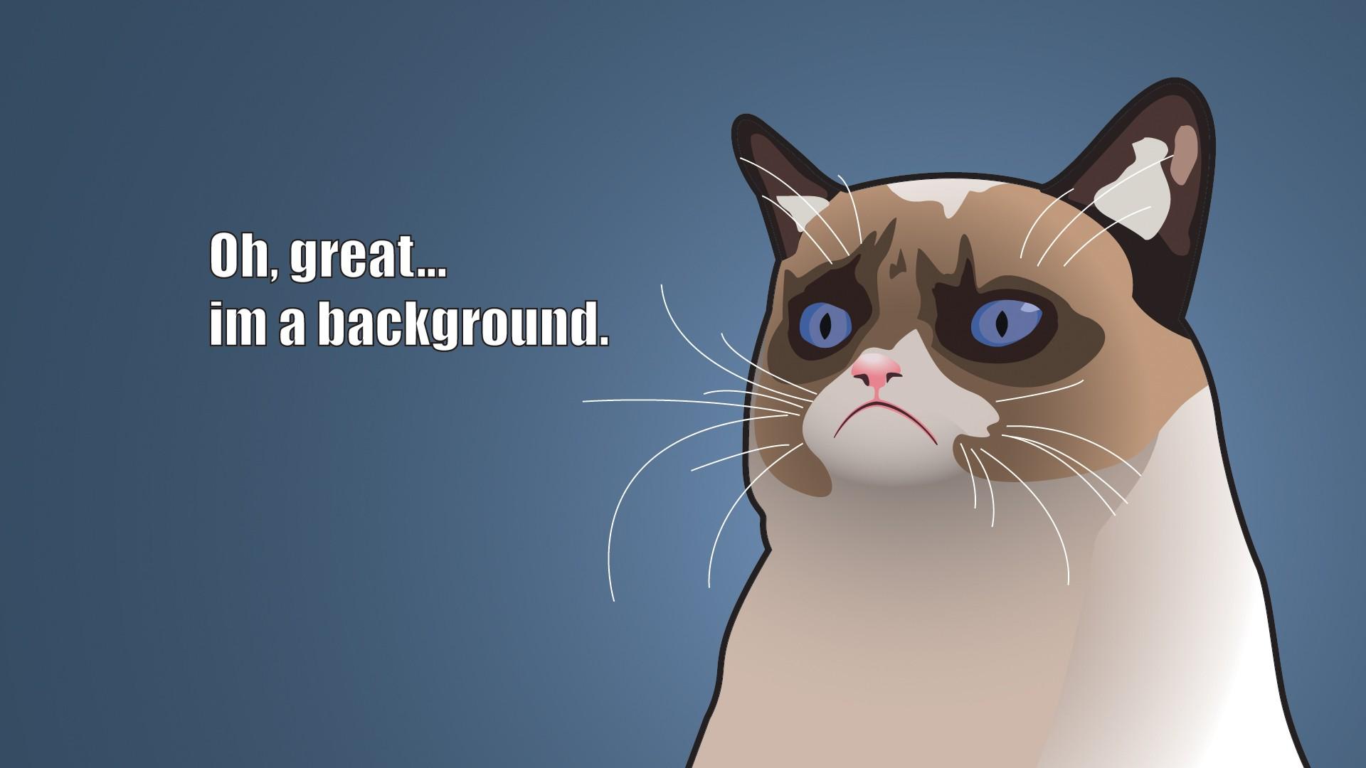 Grumpy Cat Meme Pictures humor funny cats r wallpaper 1920x1080 1920x1080