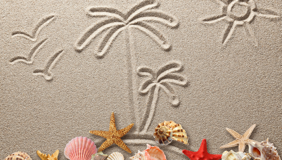 drawing figure sand starfish texture sand seashells shells 970x550