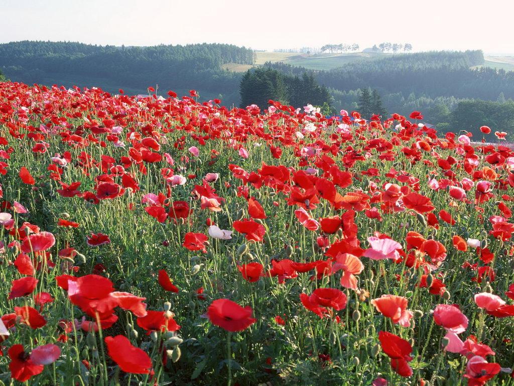 Free Flower Garden Desktop Wallpaper Wallpapersafari