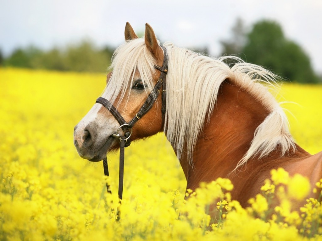 horse horses cute backgrounds wallpapers background desktop girly wallpapersafari wallpaperaccess bad fall