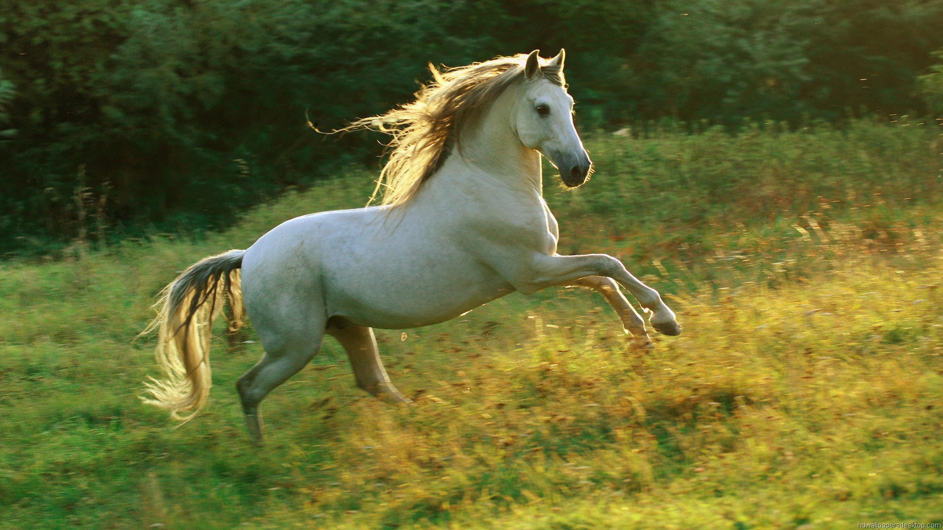 Лошадь в цветах  № 3117207 загрузить