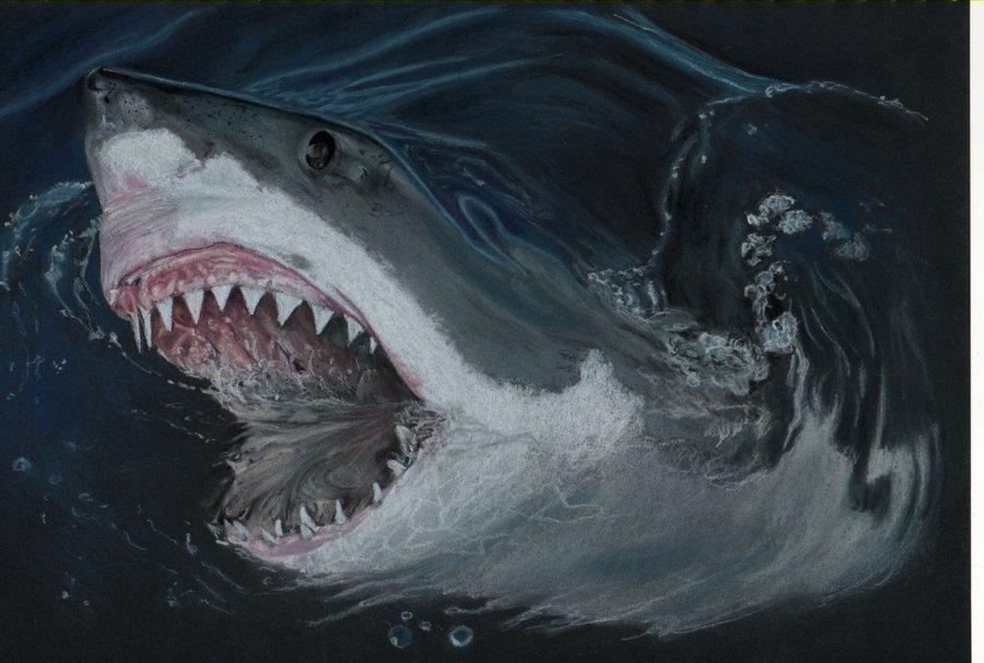 акулы злой акулы картинки каждой