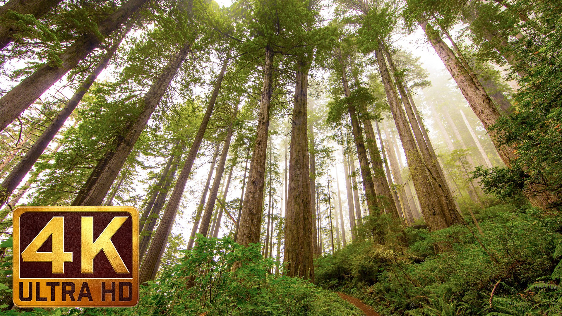 Redwood National and State Parks Photography in 4K ProArtInc 1920x1080