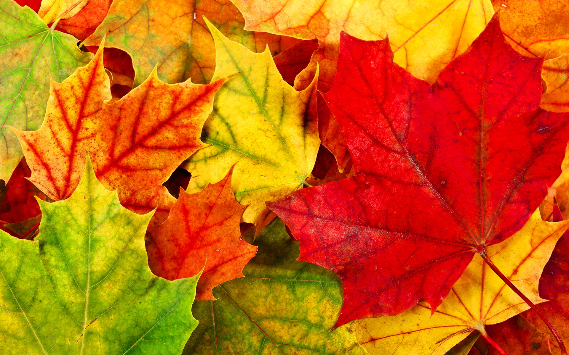 Autumn Leaves Desktop Wallpapers Wallpaper High Definition 1920x1200