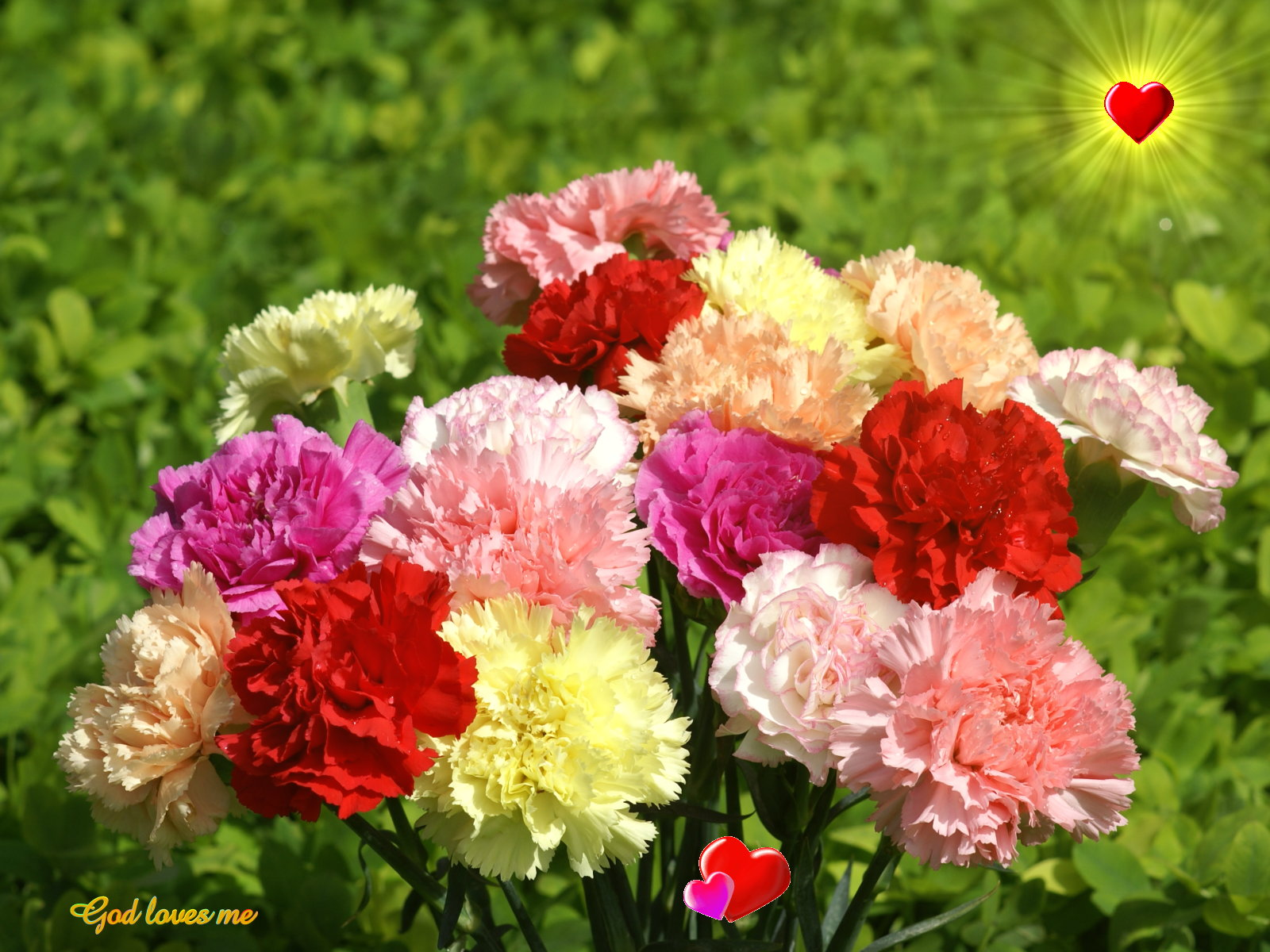 God wallpaper   colorful carnation 1600x1200