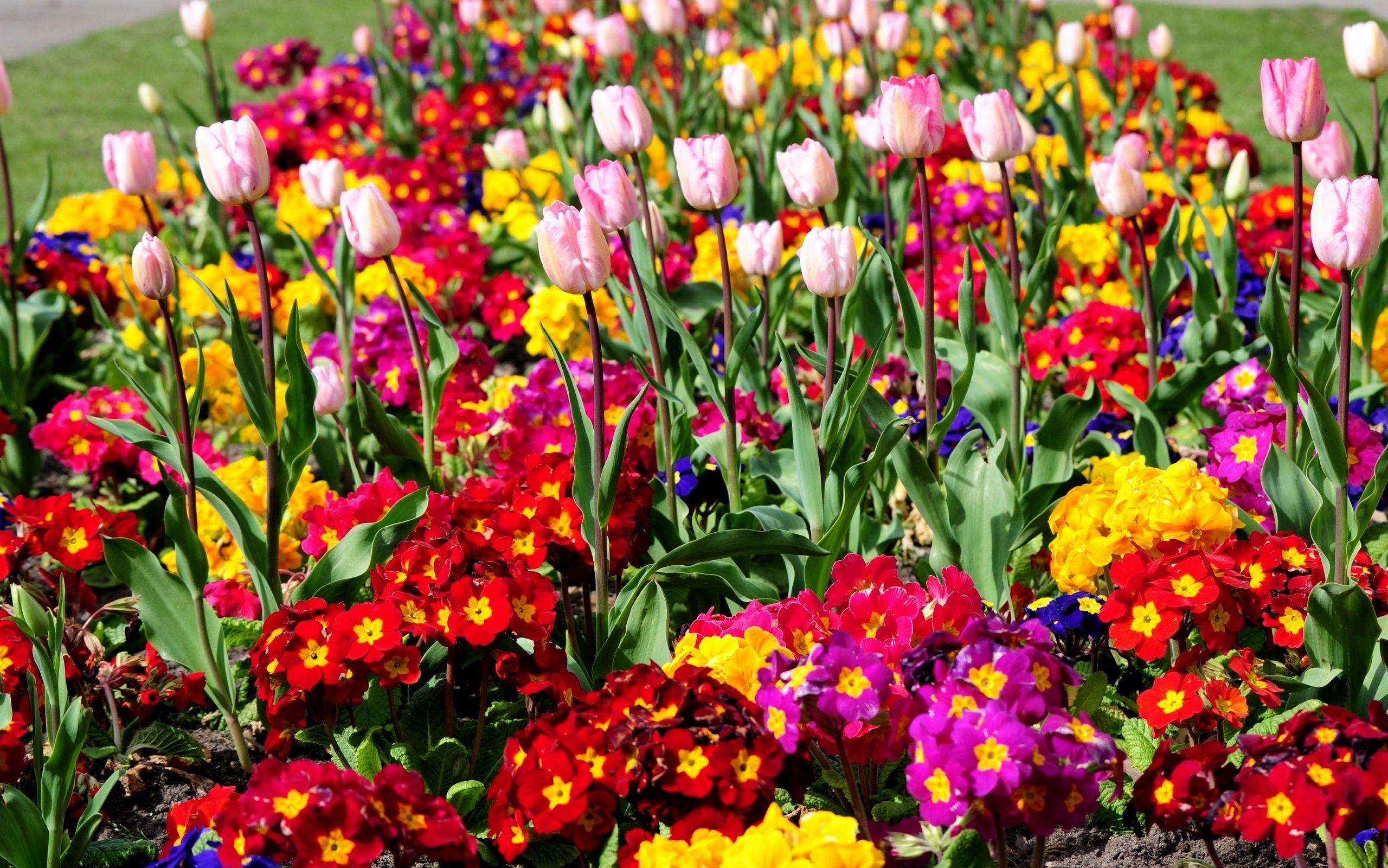 Flower garden wallpaper 20133 2560x1600