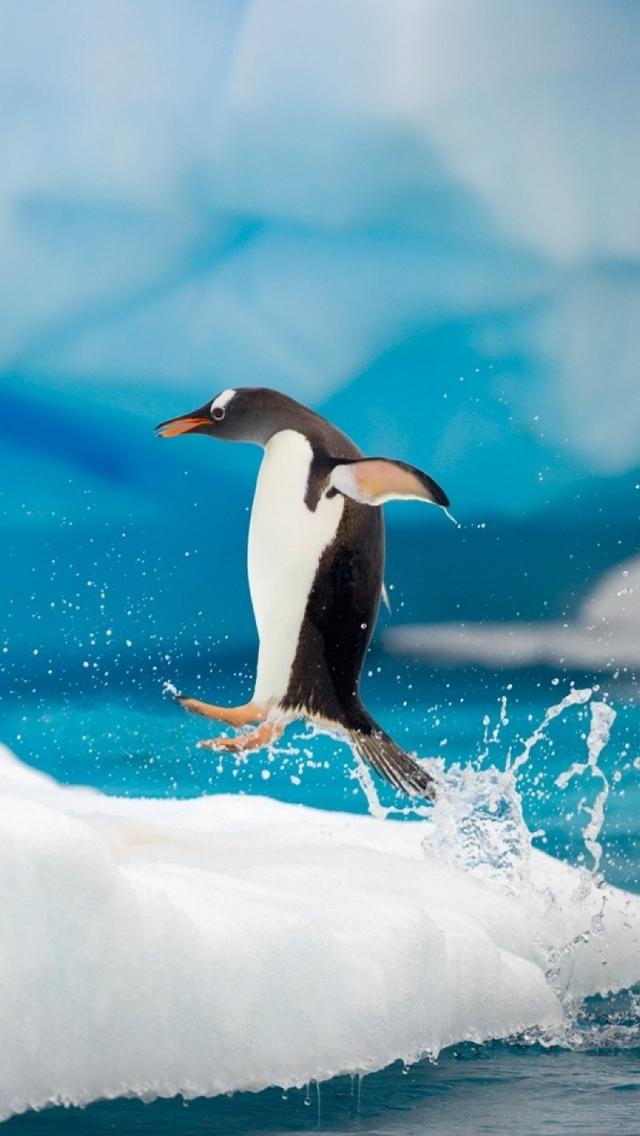 Penguin Jumping iPhone 5 Wallpaper HD   Download iPhoneWalls 640x1136