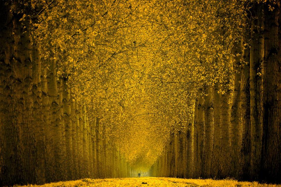 Hermoso bosque amarillo   Fotos Bonitas   Imagenes Bonitas Frases 960x640