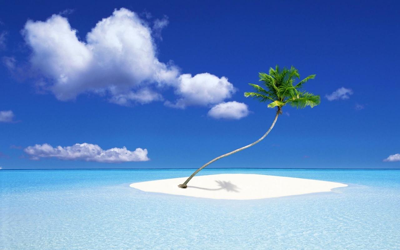 1280x800 Palm Tree Island desktop PC and Mac wallpaper 1280x800
