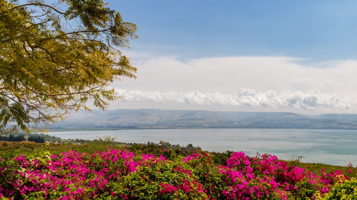 Top 6 reasons to visit the Kinneret right now ISRAEL21c 1168x657