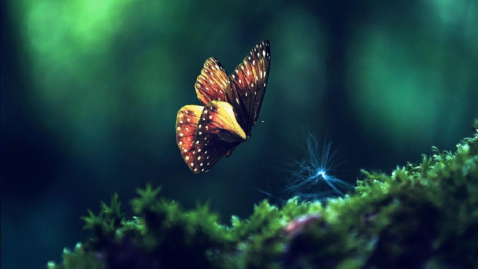 Butterfly Live Wallpaper   screenshot 1600x900