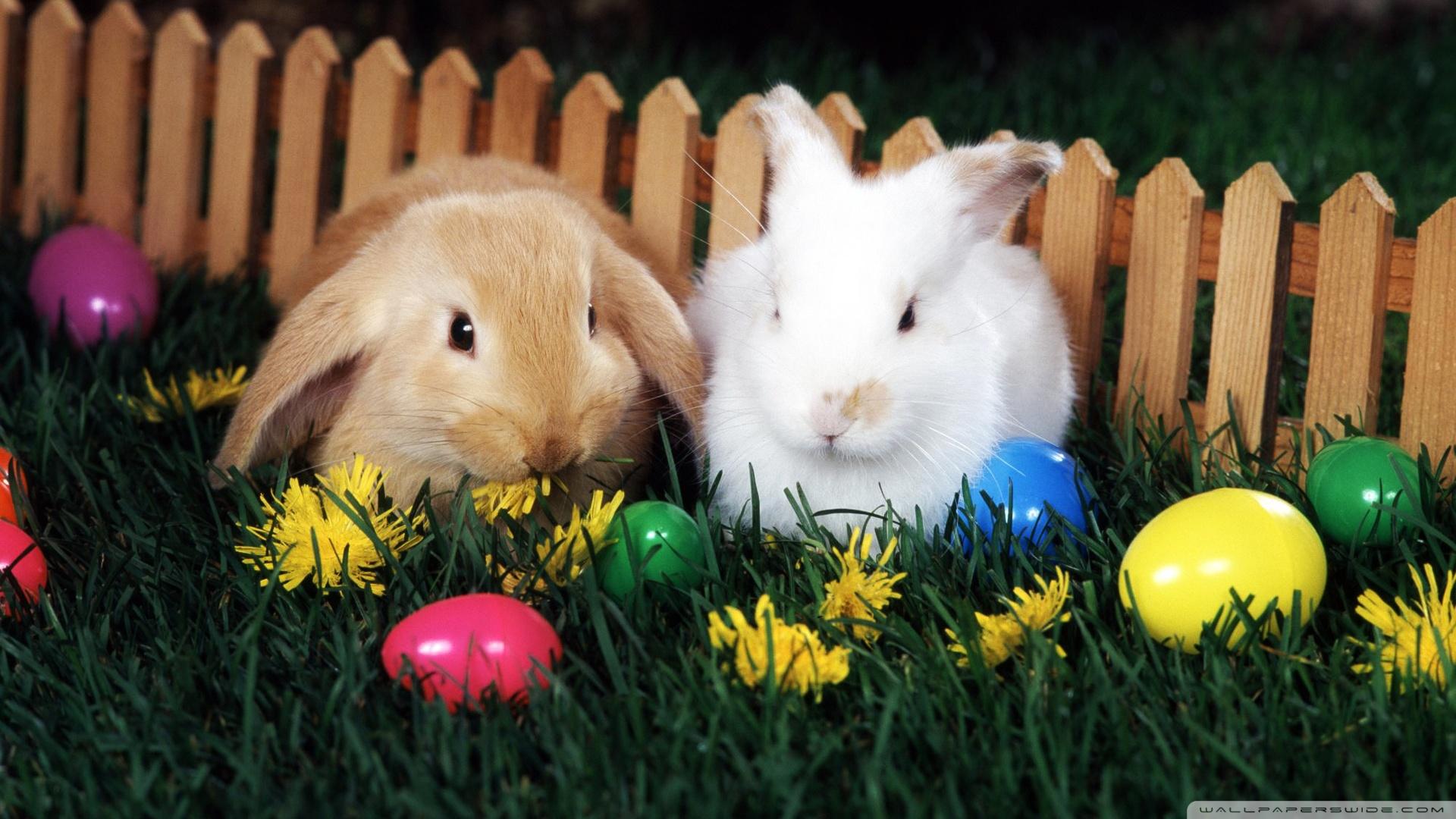 Easter Egg Hunt HD desktop wallpaper Widescreen High Definition 1920x1080