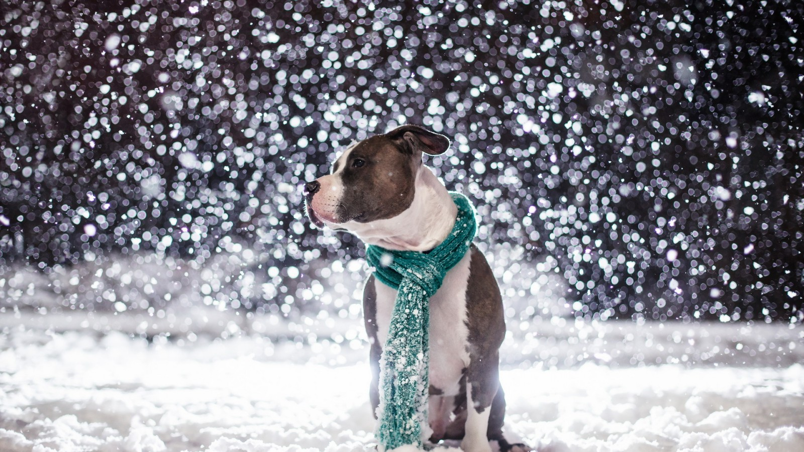Puppies in Snow Wallpaper - WallpaperSafari