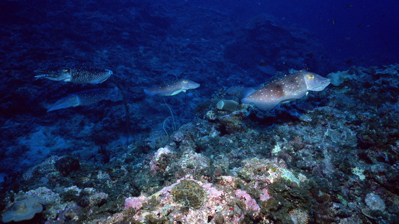 Deep Blue Underwater World Wallpaper 13   1366x768 Wallpaper Download 1366x768