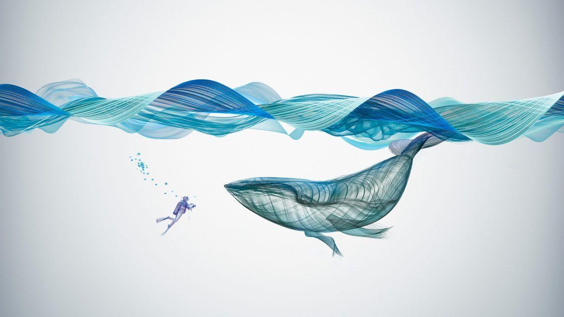 Underwater Whale Illustration Desktop Wallpapers Whale 1140x641