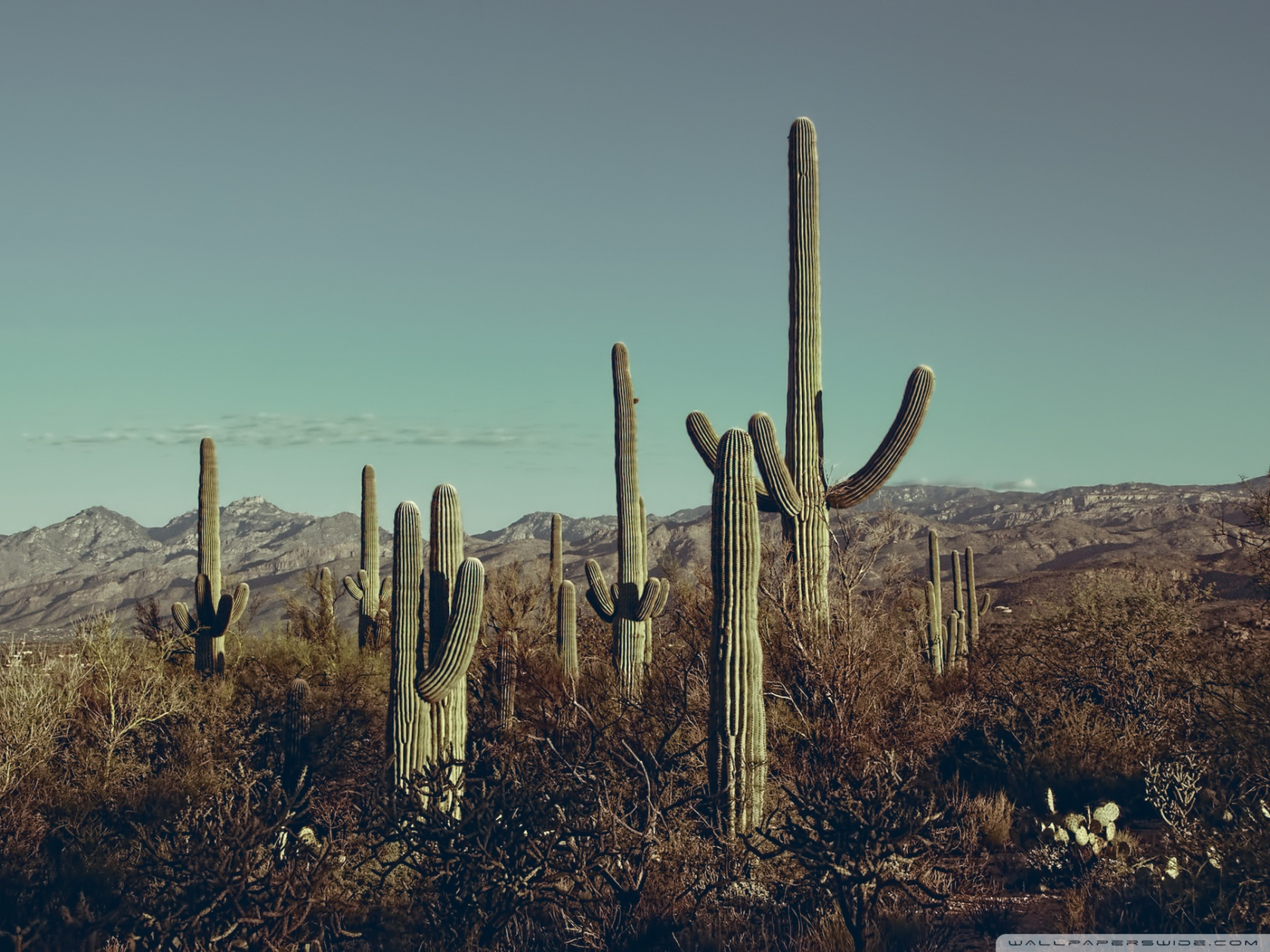 Saguaro National Park East Arizona 4K HD Desktop Wallpaper for 1680x1260
