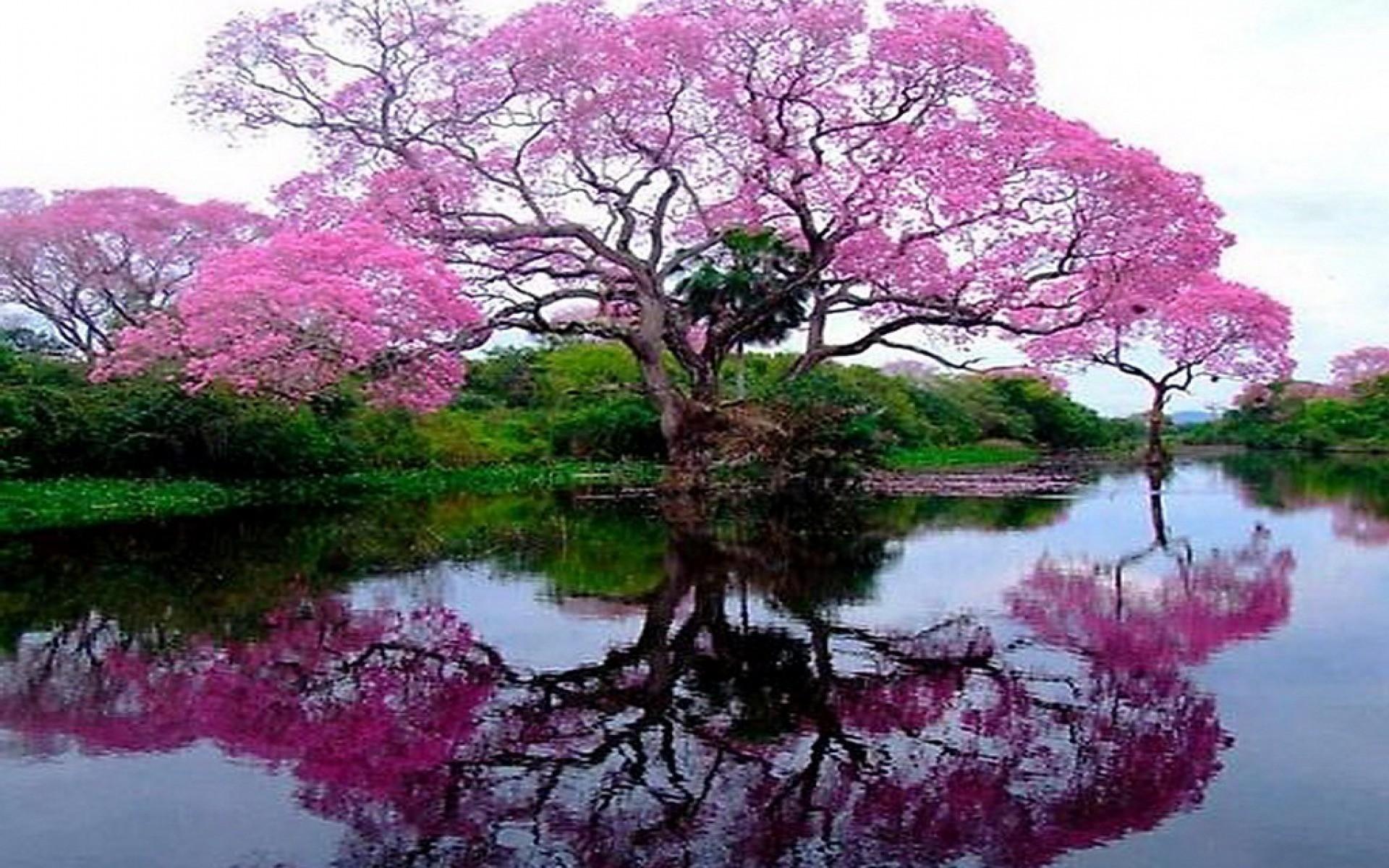 50,000+ Free Spring Flowers & Spring Images - Pixabay