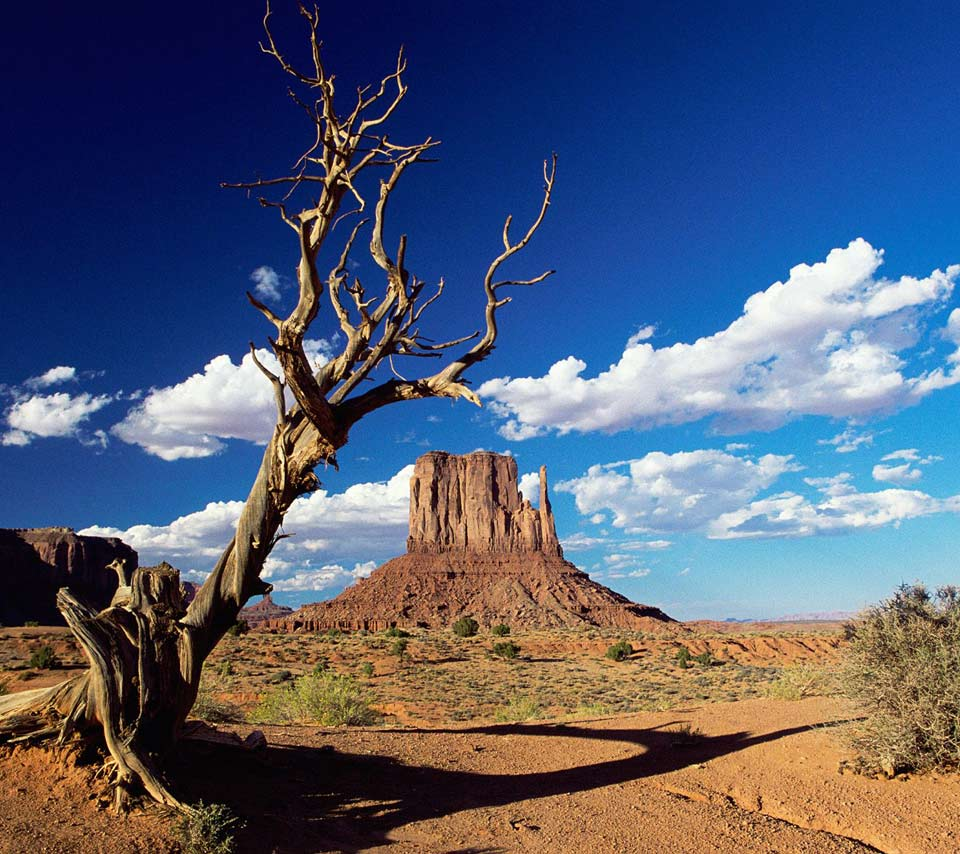 Az Wallpapers: Arizona Desert Scenes Wallpaper