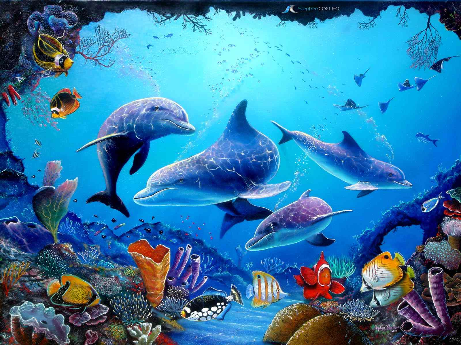 Cute Dolphins Animals theme is only available for Windows 8 and 81 1600x1200