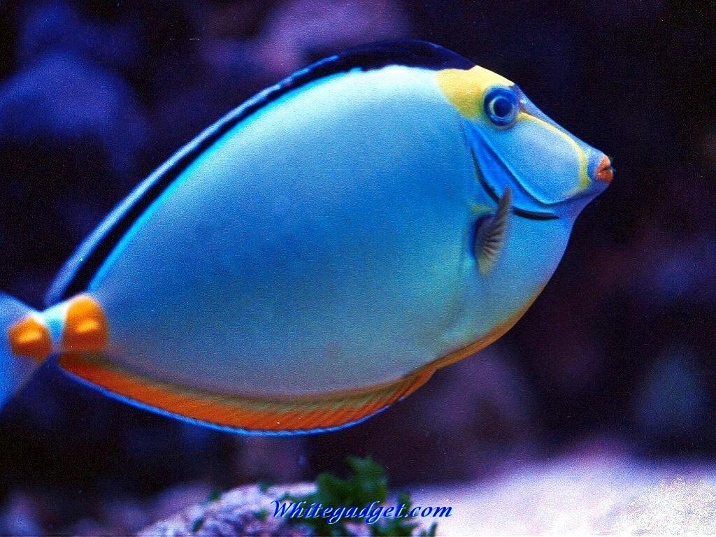 Free Download 109068 Tropical Fish Wallpaper Tropical Fish Picjpg