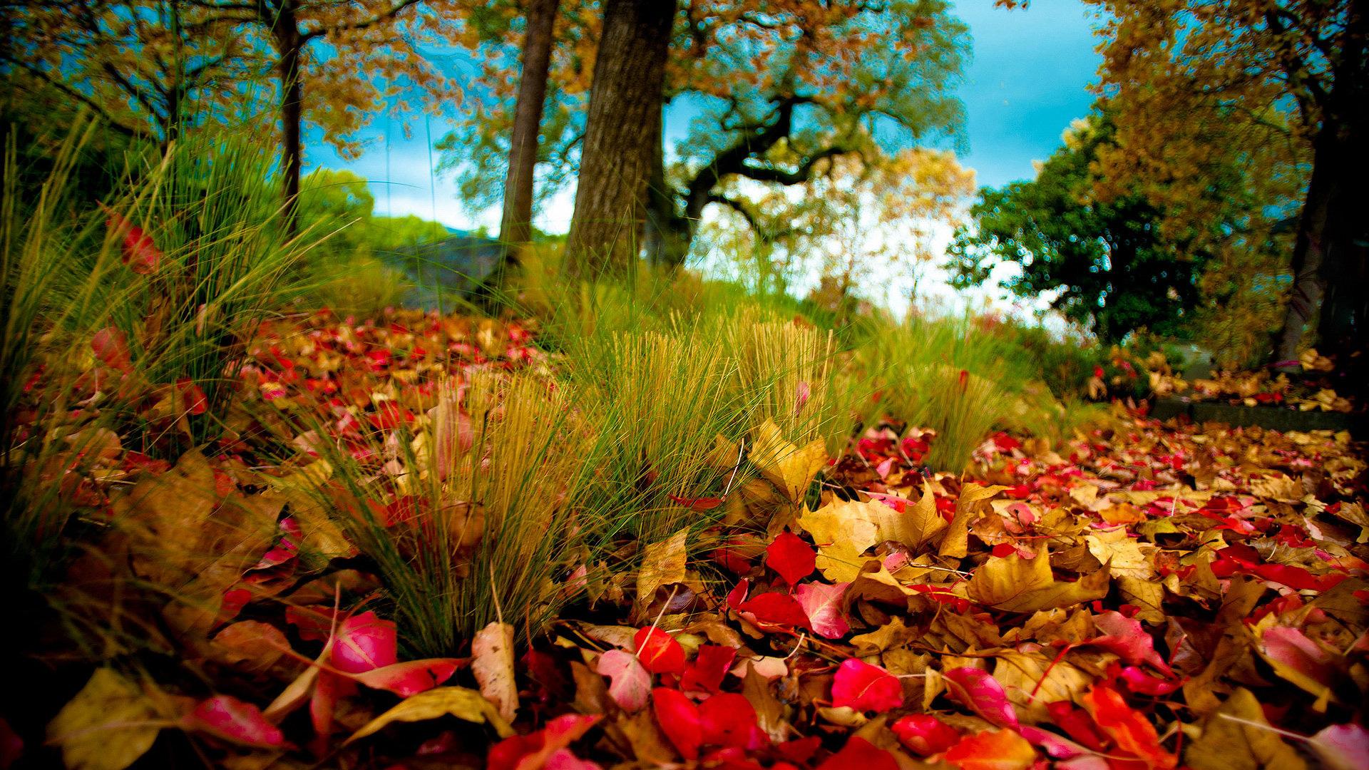 Autumn Colors - 1920x1080 - 16:9