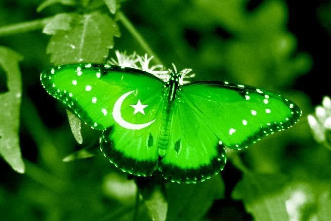 14 august 2011 pakistani wallpapers 14 august 14 august 2011 pictures 679x453