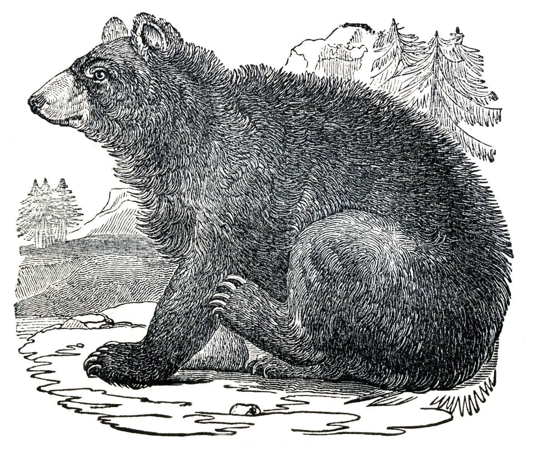 graphicsfairyblogspotblack bear clip art 1500x1293