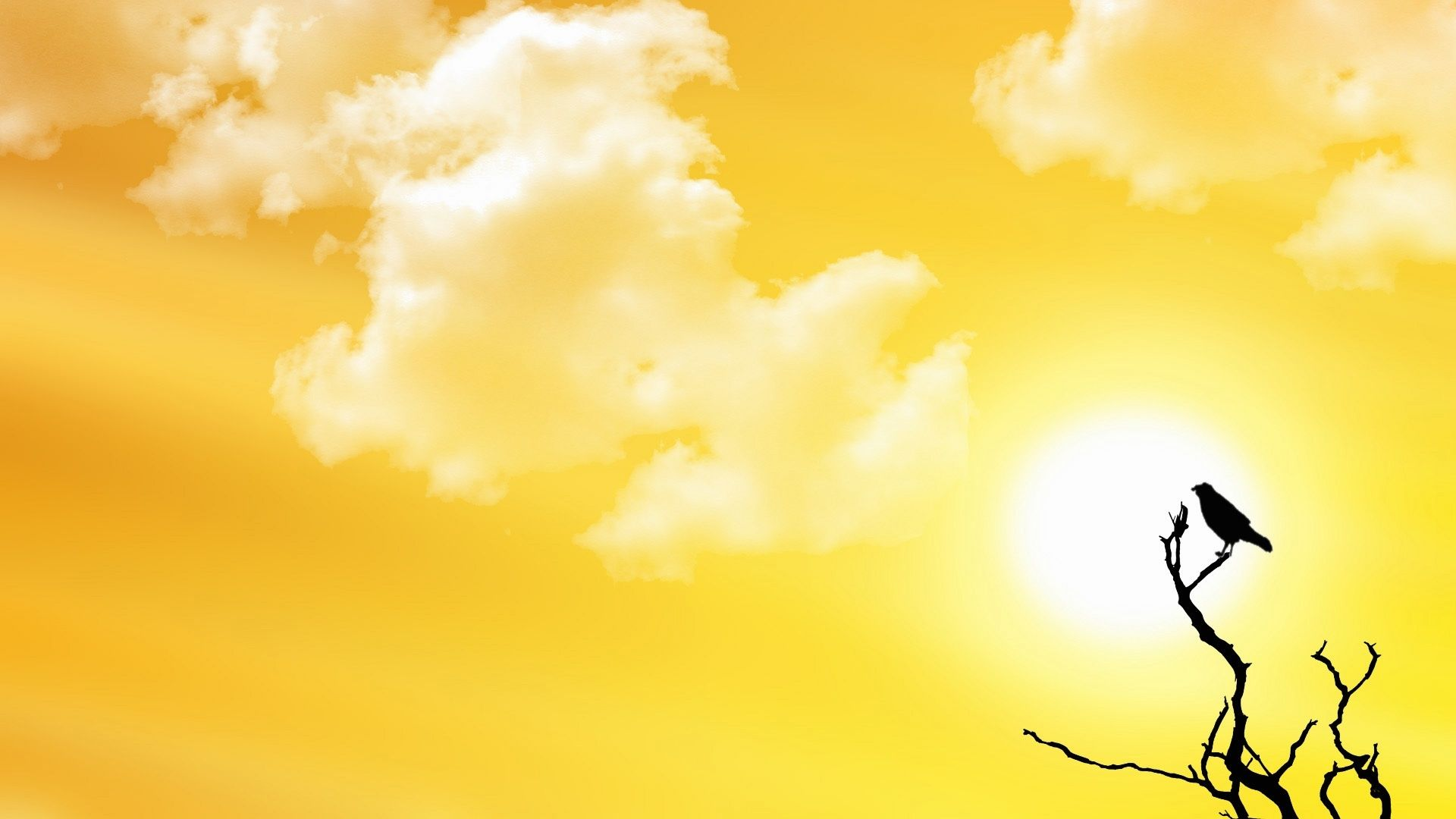 Summer Yellow Sky Nature HD Wallpaper Picture Download 1920x1080