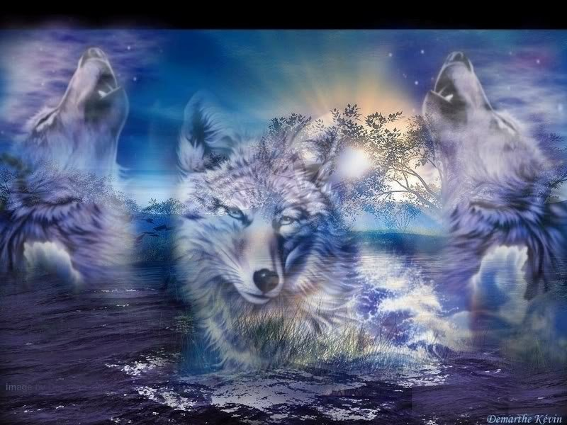 Wolves images Wolves wallpaper photos 32161203 800x600