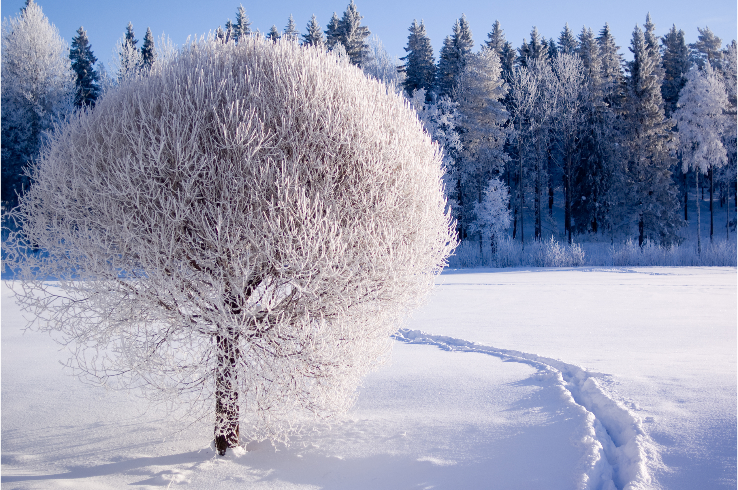 Winter Trees Desktop Backgrounds wallpaper wallpaper hd 2560x1700