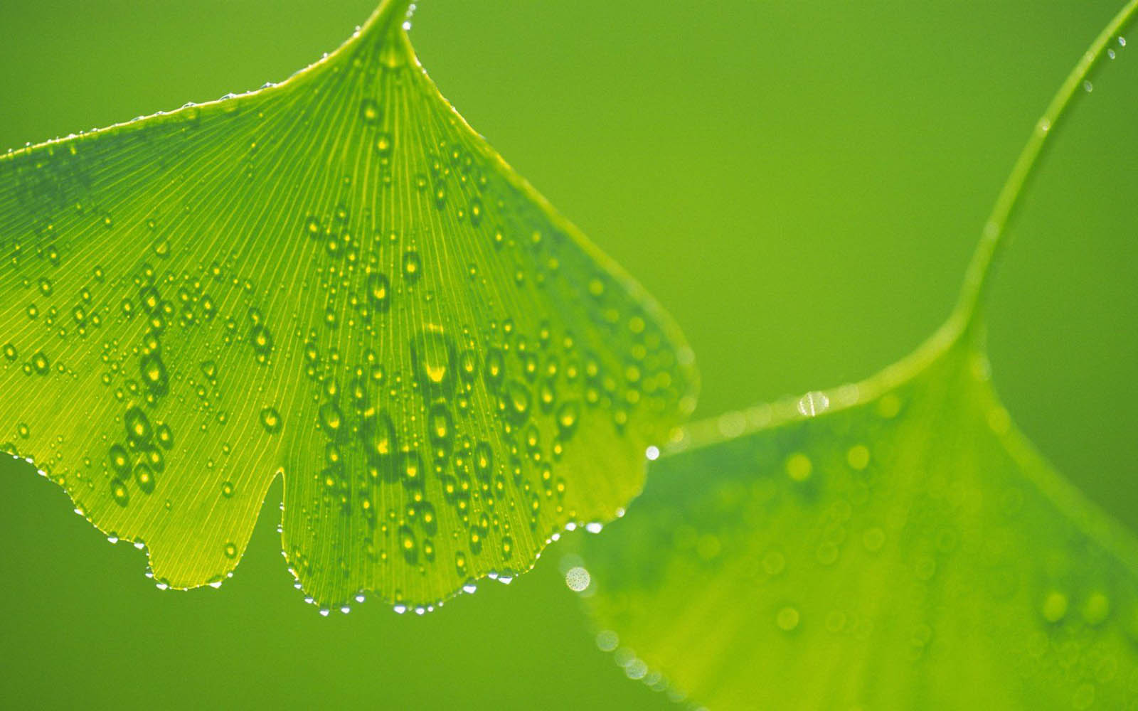 Tag Green Leaf Wallpapers Backgrounds Photos Pictures and Images 1600x1000