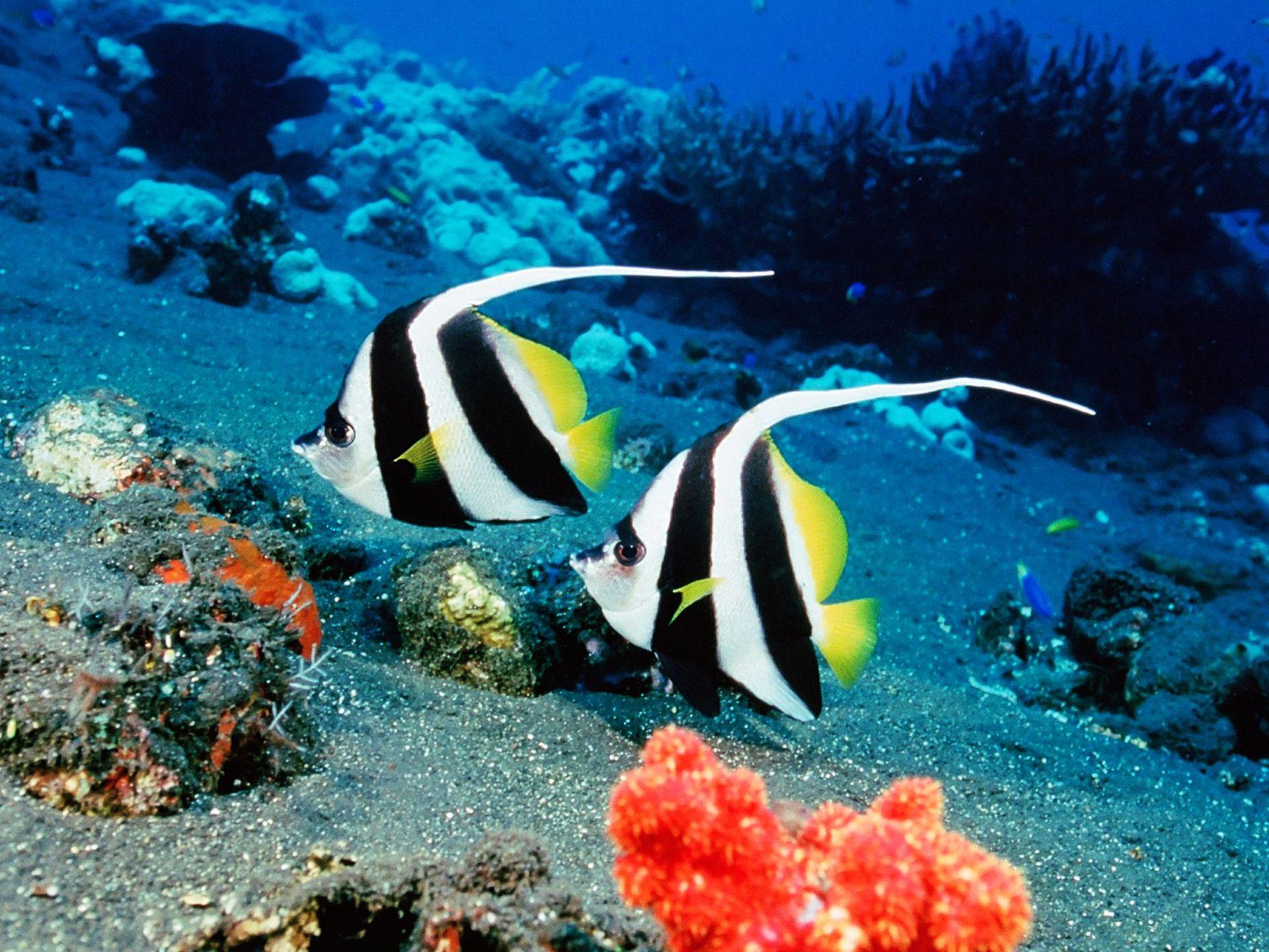 saltwater fish 1920x1440